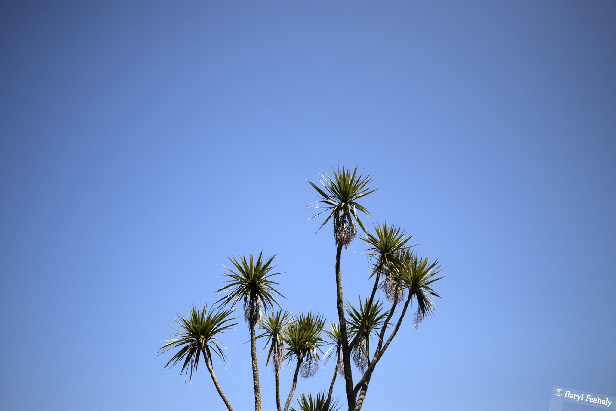 Tropical Tree & Blue Skies