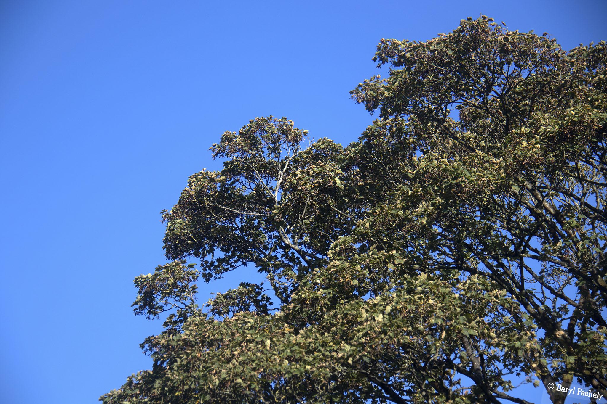Early Autumn Trees