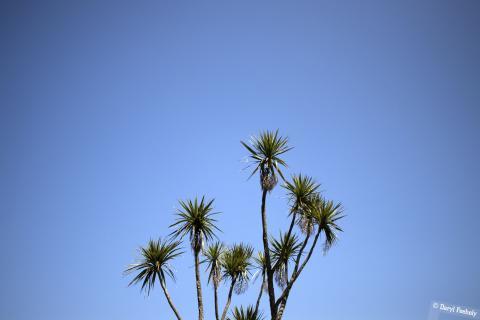 Tropical Tree & Blue Skies