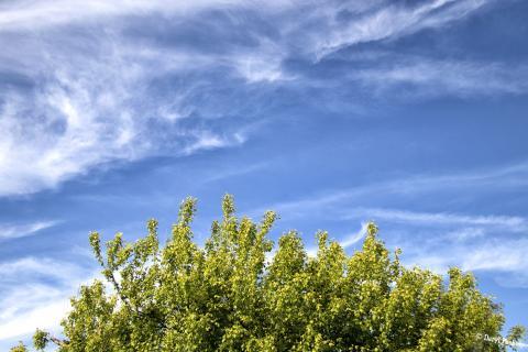 Blue Skies Over Trees